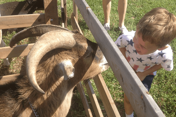 At a petting zoo summer 2016. He looks scary, but in reality is very sweet and gentle
