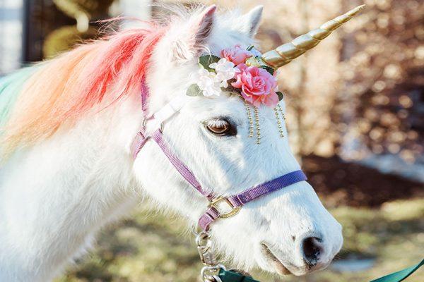 Jester as a Unicorn